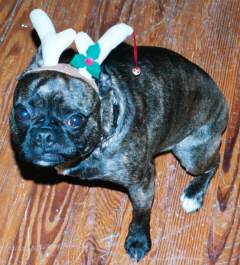 Buddha the Reindeer