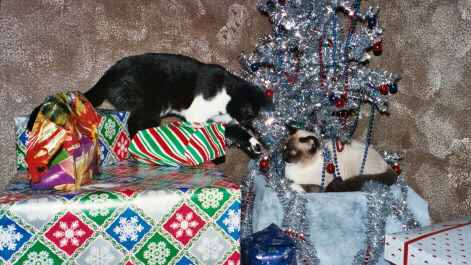 Karma and Zen playing on presents and Christmas tree.