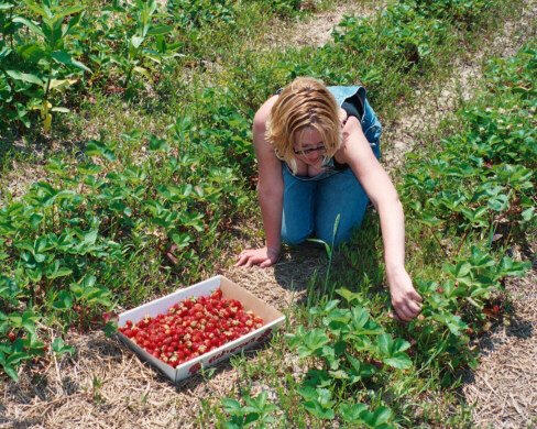 Robbie Picking Strawberries