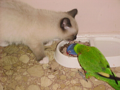 Kiki the bird and Zen the cat eating together