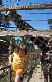 Olivia feeding a girraffe at Zooworld.